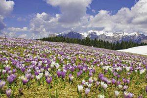 Parco Nazionale delle Dolomiti Bellunesi